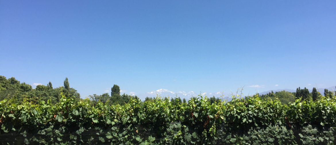 Things to do in Mendoza - Bodega Casarena