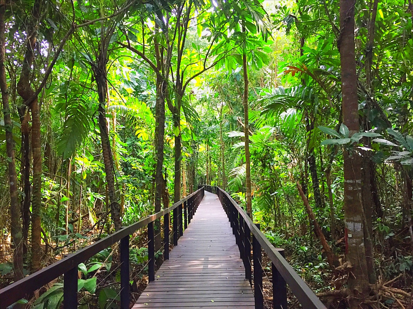 The Ultimate Guide To Cahuita National Park Costa Rica